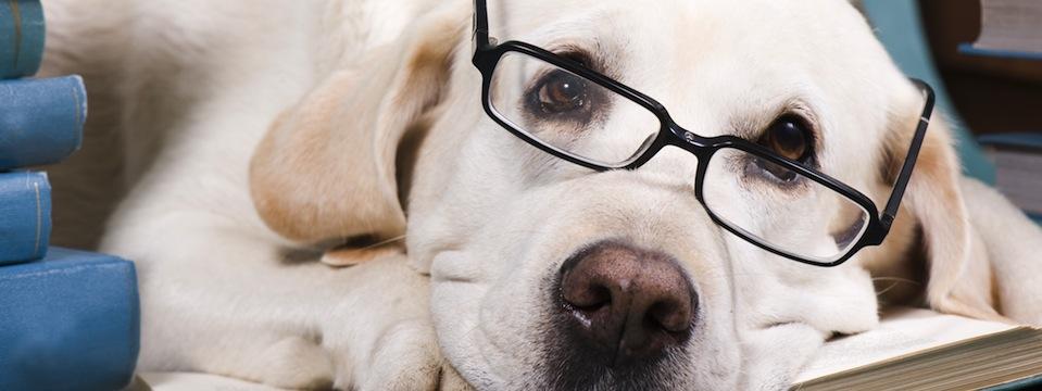suo su akiniais