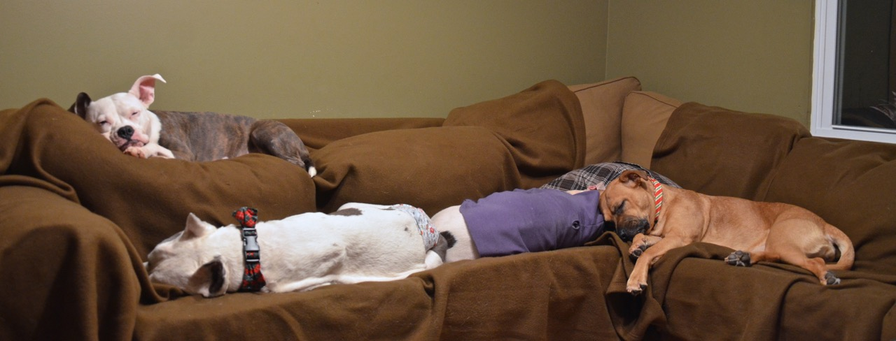miegantys sunys