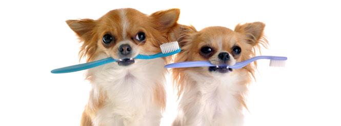 suns dantu valymas