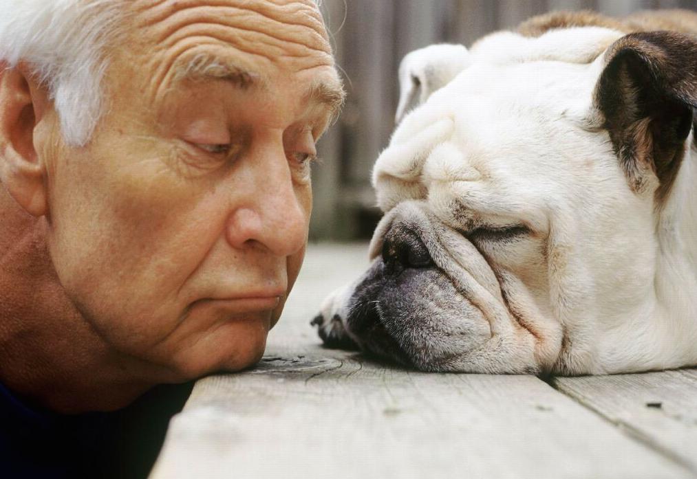 suns ir zmogaus amziaus palyginimas