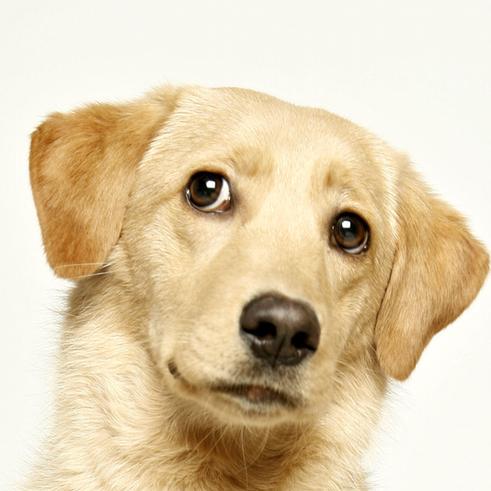 Ketinate įsigyti šunelį? Paprasti svarbūs patarimai