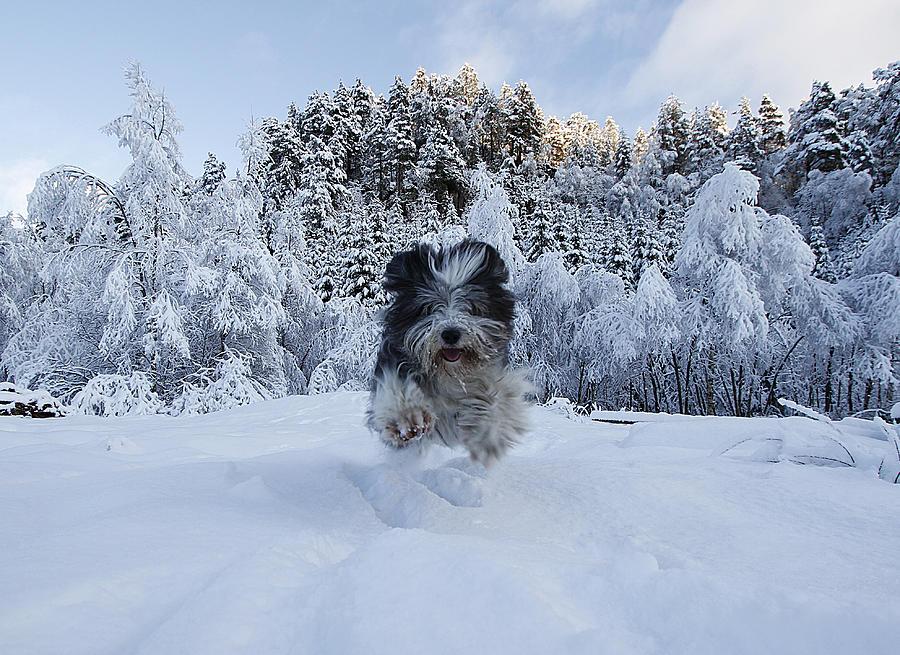 suo sniege